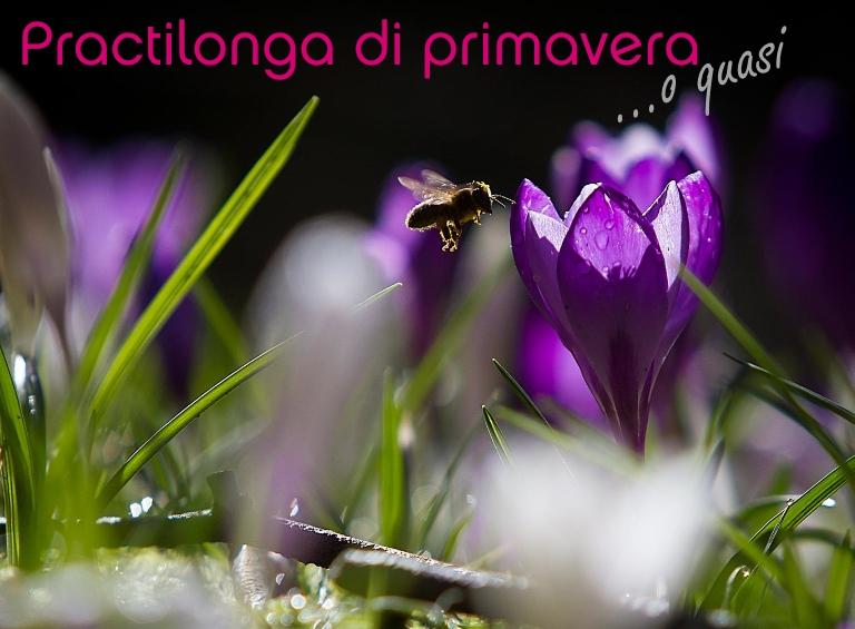 Practilonga-Primavera